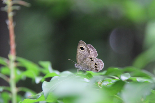 A96511img_0001