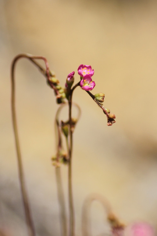 Img_4006t
